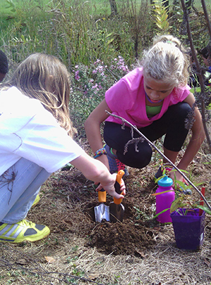 Students transplanting from pots to site